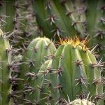 تمام نکات مورد نیاز برای نگهداری و پرورش کاکتوس ها و روش های افزایش رشد کاکتوس ها- cactus